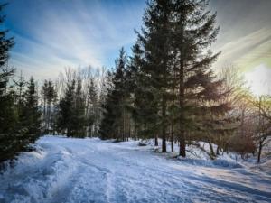 Waldränder und kurze Waldabschnitte