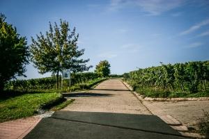 Start des Zehntgrafen-Weinwanderweges