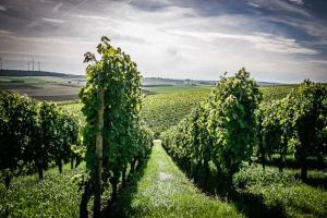 Der Zehntgrafen-Weinwanderweg bei Wipfeld