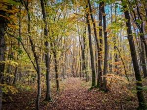 Lichter Wald auf dem Possenberg