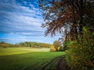 Kurz am Waldrand entlang dann links hoch