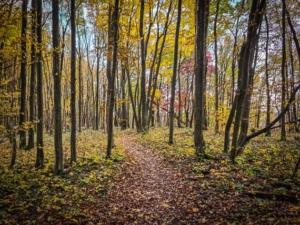 Erneuter Wanderpfad im lichten Laubwald
