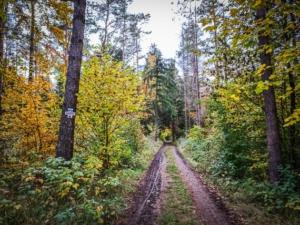Breiter Forstweg in den Wald