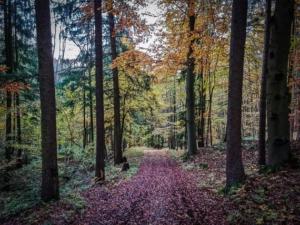 Weg im Wald bergab