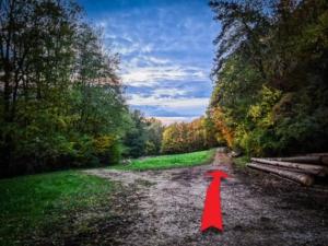 Den Weg am Waldrand wählen
