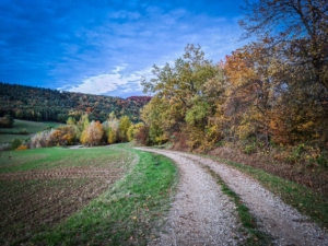 An Hecke entlang bergab