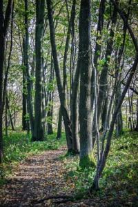 Schöner Wanderpfad im Wald