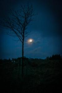 Rückweg im Mondschein