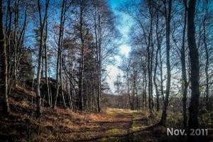 Weg durch lichten Wald
