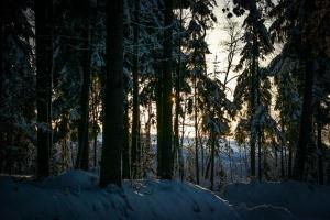 Dämmerung im Wald