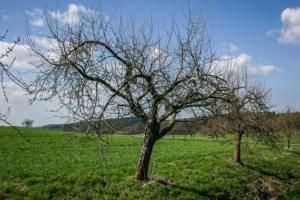 Weg an Obstbäumen entlang