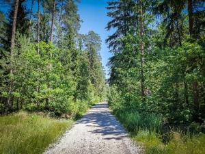 Weg gerade in den Wald
