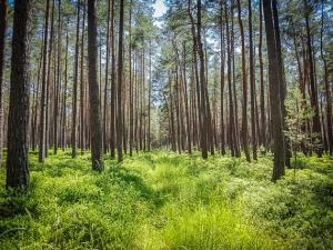 MIt Gras überwachsener Weg im lichten Wald