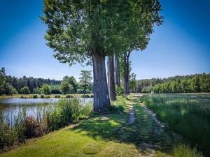Baum-Allee am Weiher