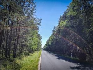 Ruhige Landstraße im Wald