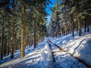 Wieder flacher am Hang entlang durch den Wald