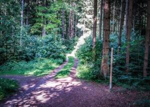 An erster Abzweigung im Wald links