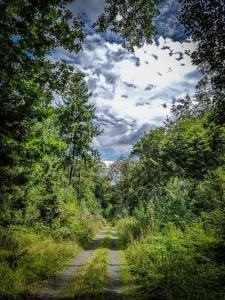 Rückweg im lichten Mischwald