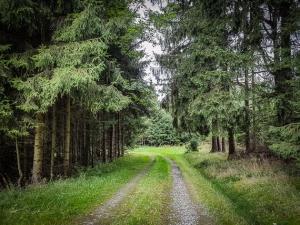 Weg in den Wald