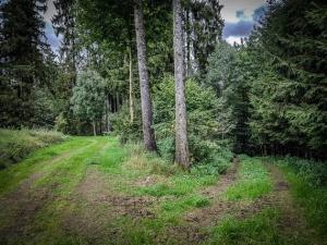 An Gabelung im Wald nach rechts unten