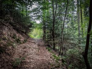 Wanderweg zum Ort Stein