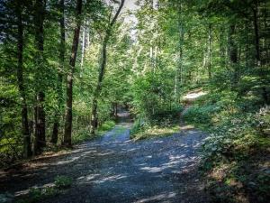 Wegkreuzung im Wald