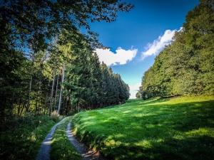 Waldschneise mit Wiese