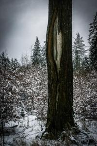 Unterwegs in stillen Wäldern