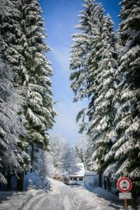 Breiter Weg im verschneiten Wald