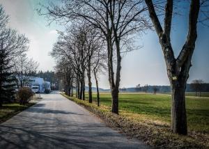 Schmale Straße mit Allee
