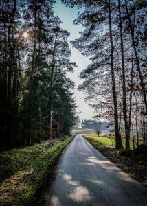 Erneute Etappe durch den Wald