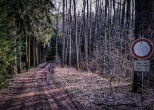 Weg durch den lichten Wald