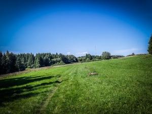 Weg über offenen Wiesen