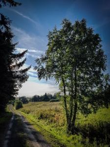 Auf breitem Feldweg