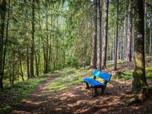 Weg im Wald Ruhebank