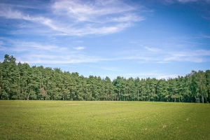 Weite freie Fläche vorm Wald