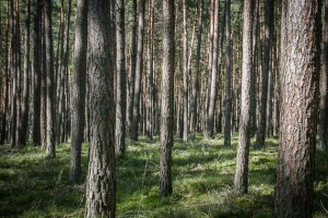 Ebener mittelfränkischer Wald