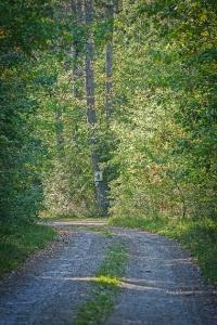 Geschotterter Waldweg