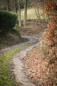 An Fichtenhecke entlang