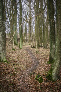 Weg im Wald am Hang