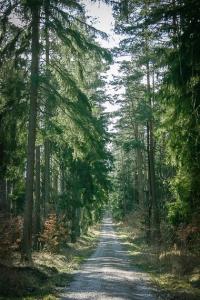 Weg durch den ebenen Wald