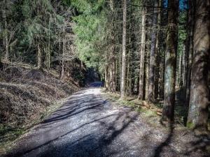 Waldweg bergab