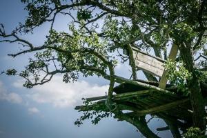 Hochsitz auf Baum