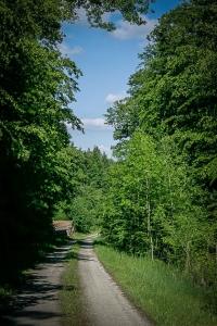 Breiter Forstweg im Wald