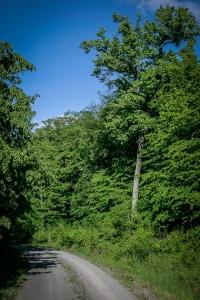 Weiterer breiter Weg im Wald
