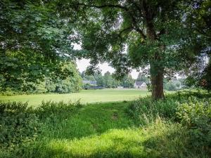 Hecke mit großen Bäumen