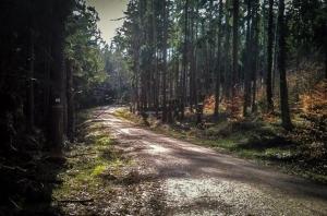 Weg durch den Wald in Richtung Südflanke