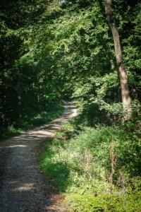 Wieder auf breiterem Forstweg
