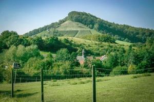 Der Stollberg als höchster Weinberg Frankens