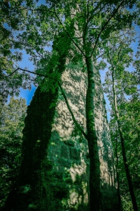 Turm auf dem Stollberg